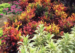 HL - Florida garden with green, red, and yellow bushes.